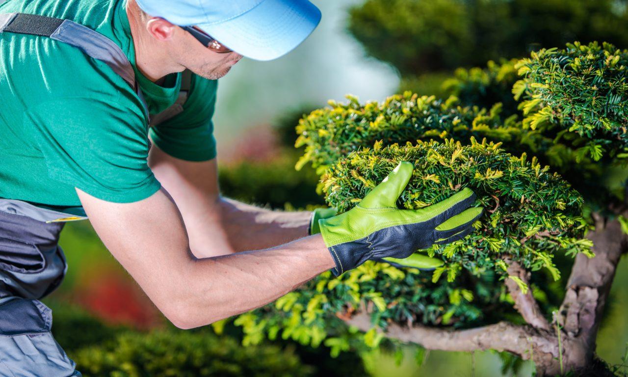 Manteniment jardins